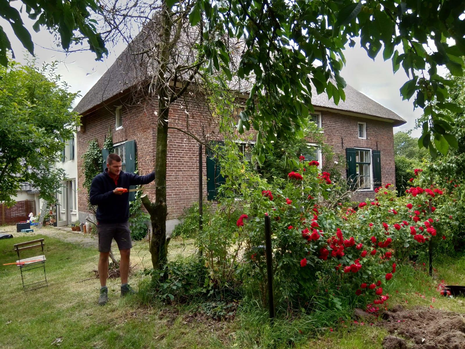 Boom omzagen niek termaat klus en tuin